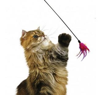 jouet chat mort