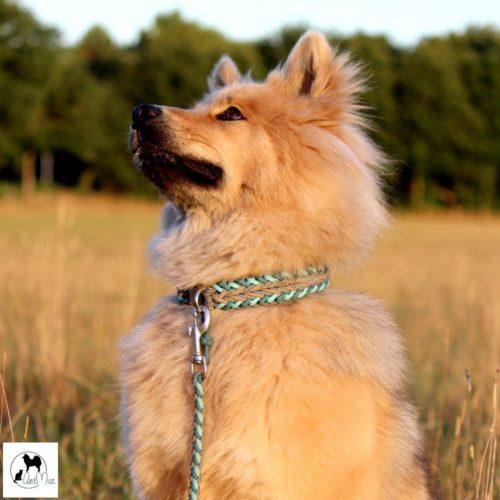 collier pour chien en paracorde